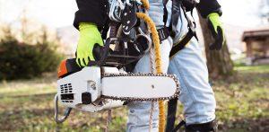 Överlåt ditt trädarbete till en arborist i Stockholm